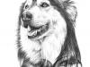 Hund-teckning-5