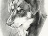 hund_stefan_2
