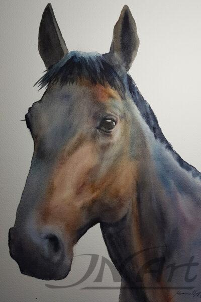 häst akvarell